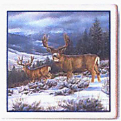 3.6 Buck in Snow Coasters